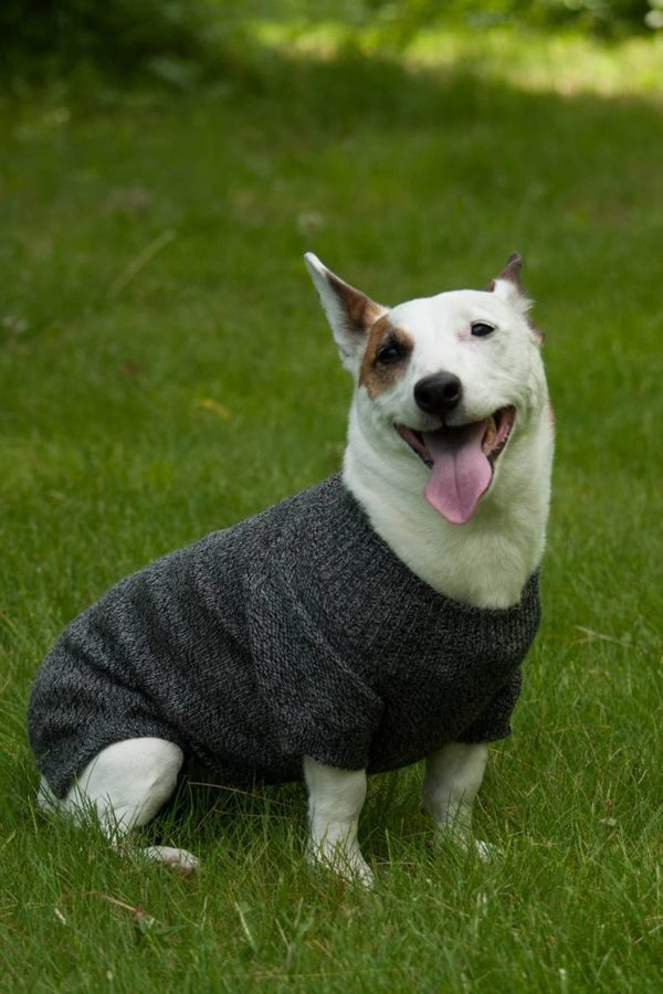 Pure Baby Alpaca Dog Sweater