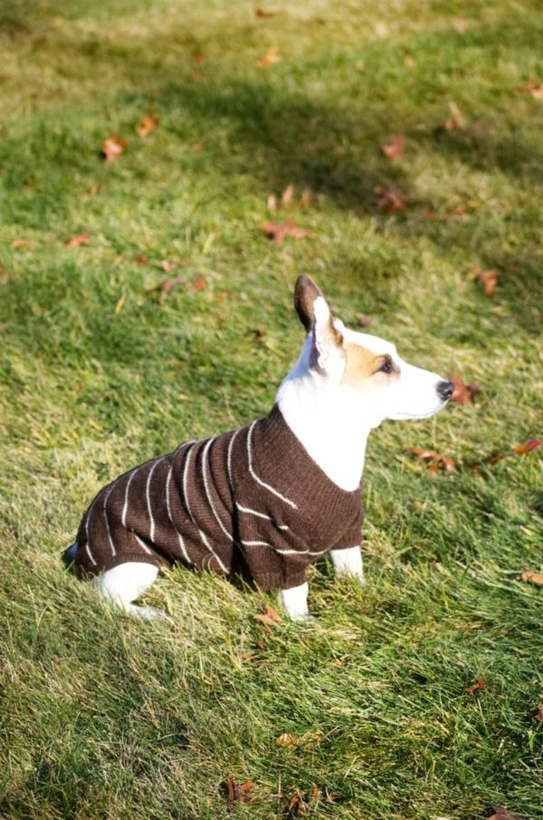 All Natural Alpaca Raglan Dog Sweater
