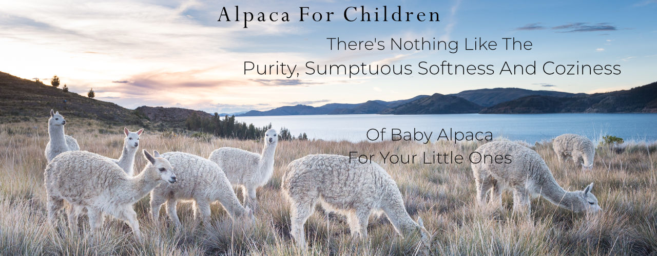 Pure Baby Alpaca Knitwer, Teddy Bears And Blankets For Babies And Children